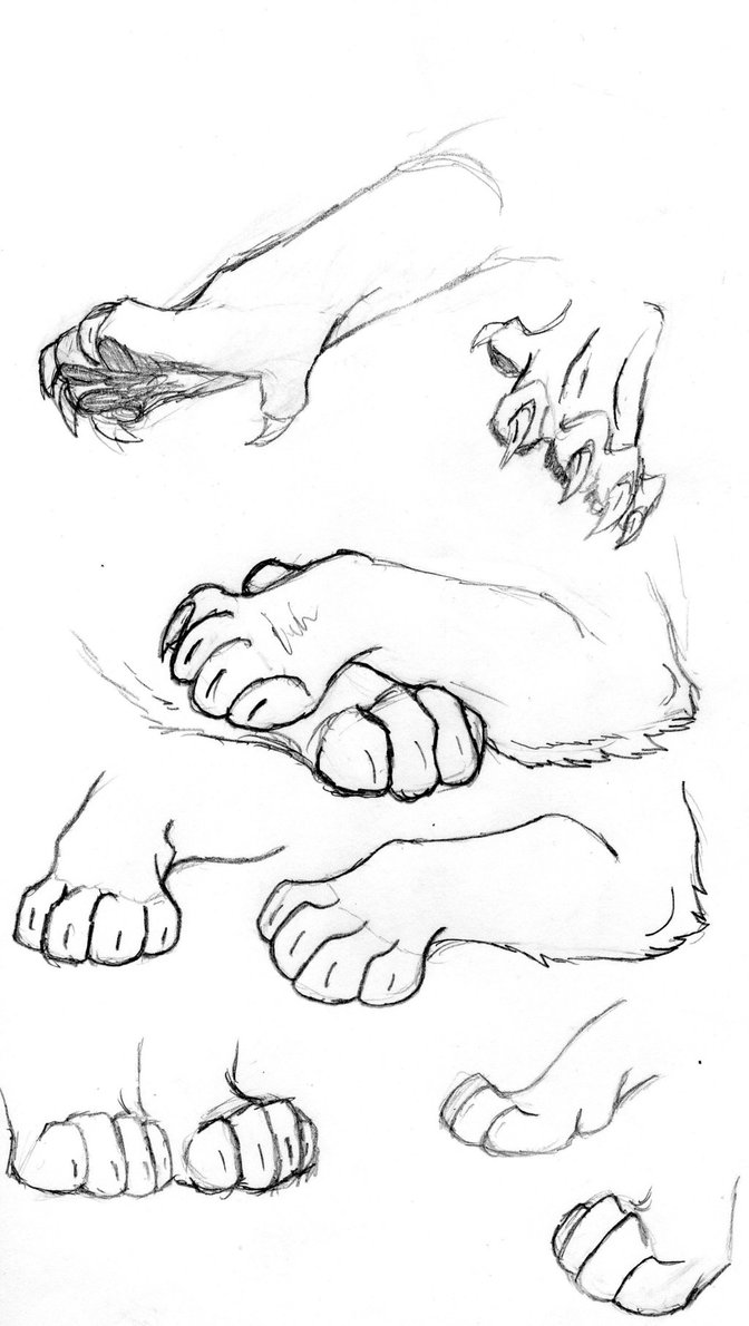 Cat Paws Drawing