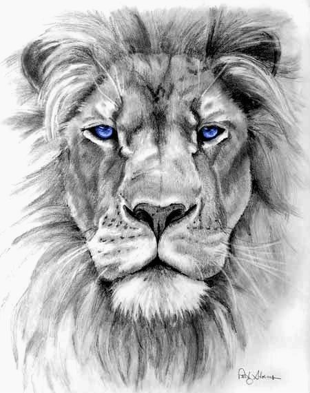 Lion Drawing Pic
