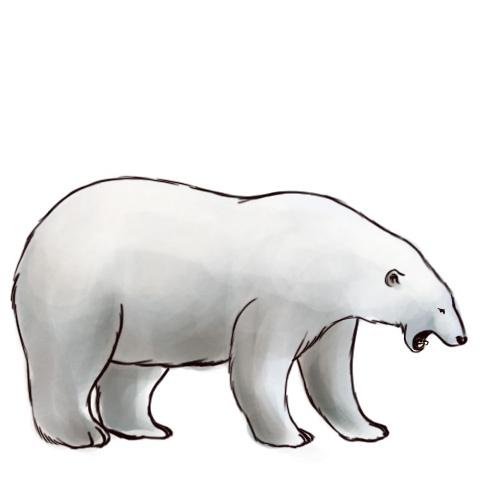 Polar Bear Drawing Pic