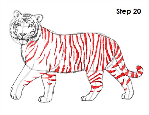 Tiger Drawing Image