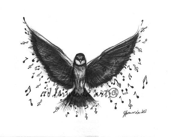 Music Bird Drawing Photos