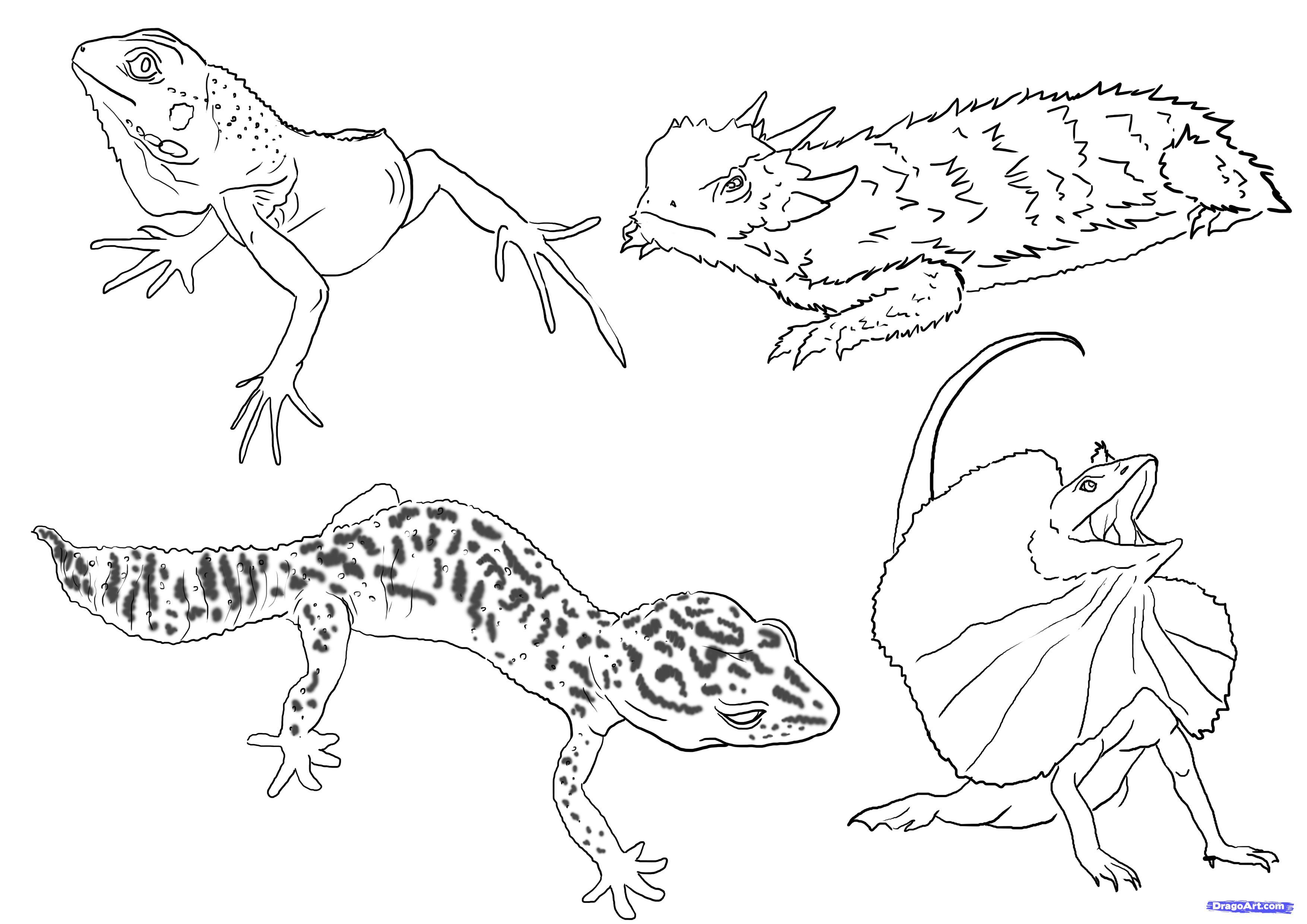 Lizard Dragon Drawing Best