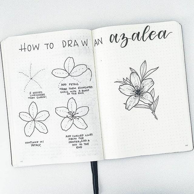 Azalea Drawing Best